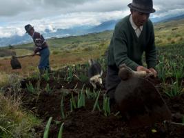© AVSF Ecuador