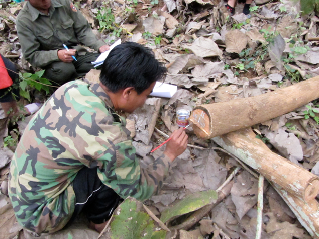 Log marking in Ban Laksip
