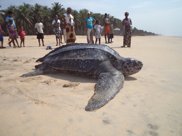 Release of a leatherback turtle © SOS Dassioko