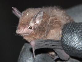 © Shawn Thomas/Bat Conservation International