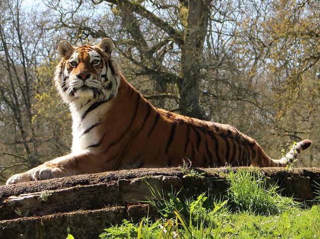 Rencontre Femme Tiger Point - Site de rencontre gratuit Tiger Point
