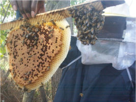 Beekeepers training