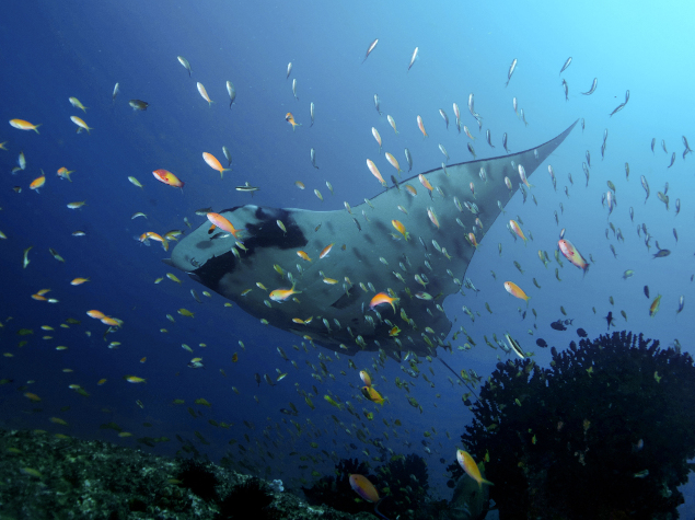 © Anna Flam / Marine Megafauna Foundation